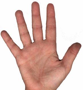Porque a nossa mão é riscada?