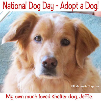 shelter pets adoption