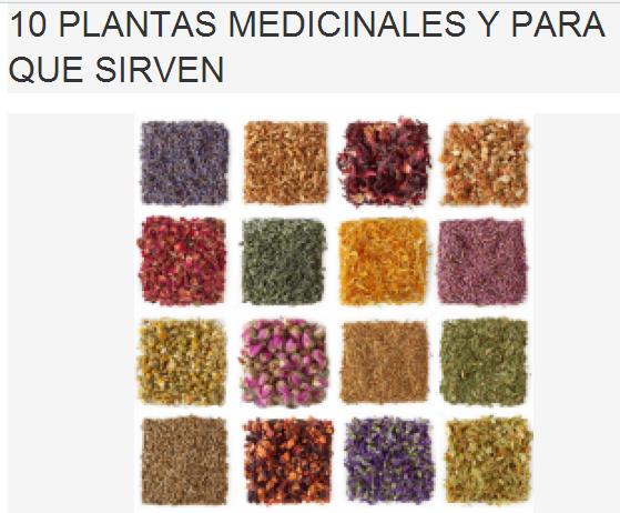 ARMAK de ODELOT 10 PLANTAS MEDICINALES Y PARA QUE SIRVEN