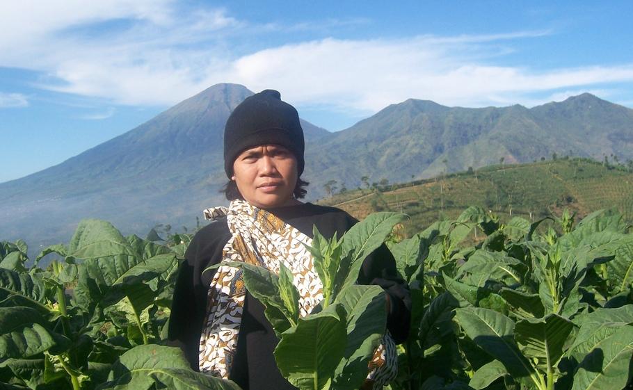 Cara Petani Beradaptasi dengan Iklim