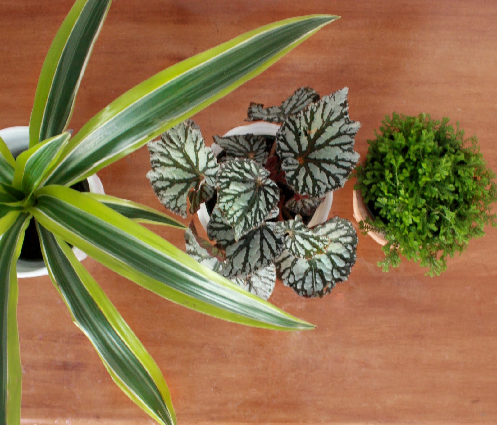 Flores del sol houseplants 101 - Names of indoor plants ...