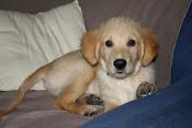Onze nieuwe hond