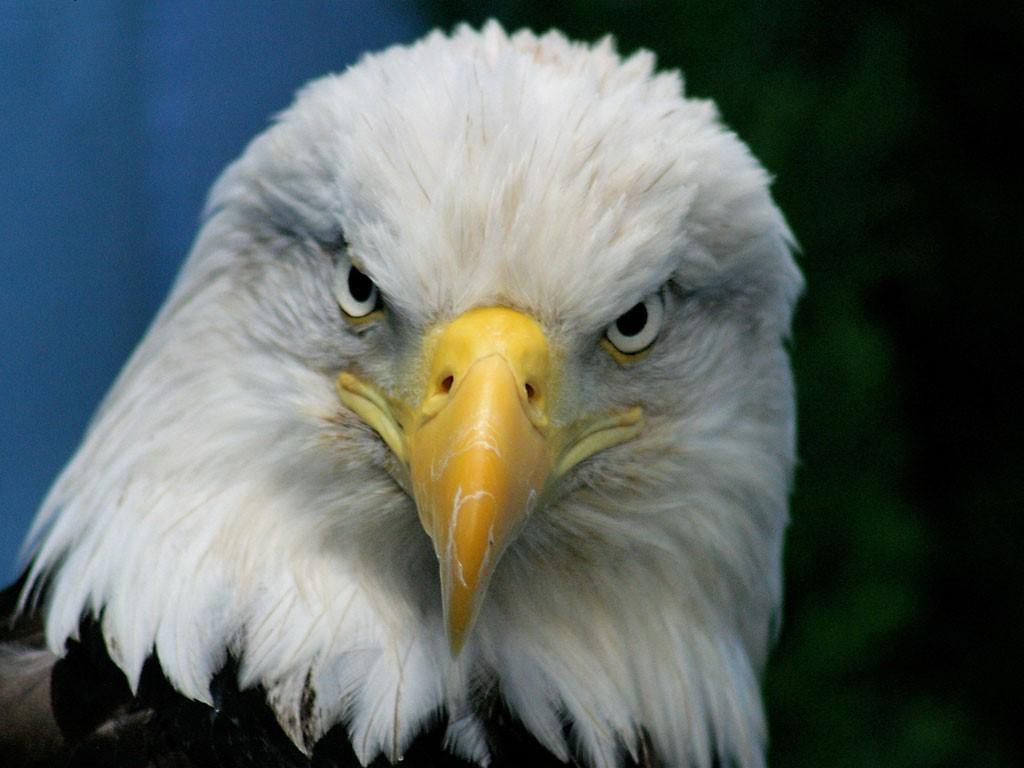La Transformación del Águila: Renovarse o morir
