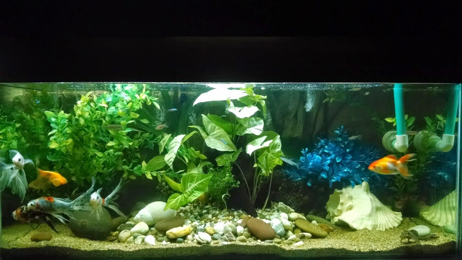 acuariopat a como plantar acuario que ya tiene peces