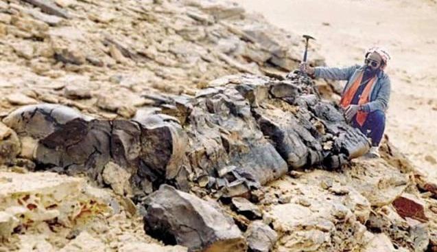 Jamur Besar 6 Meter Ditemukan
