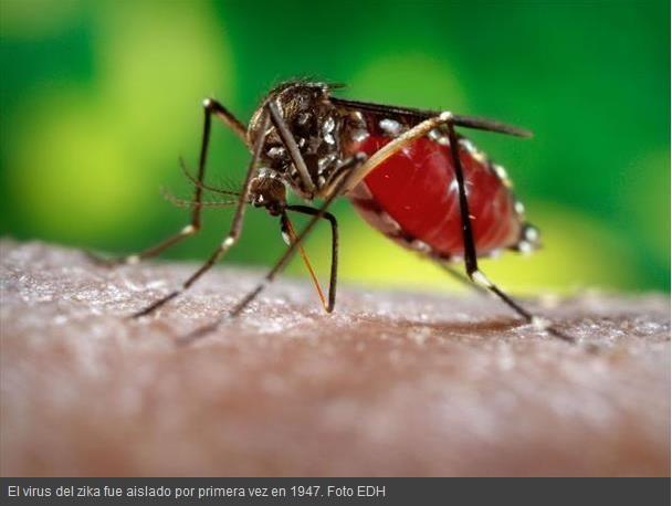 Alerta ante posible llegada del virus del zika a latinoamerica