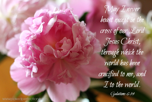 Food for the Soul ~ Galatians 6:14 ~ Pink Peonies