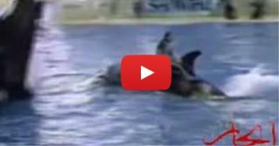 بالفيديو ... حادث غير متوقع إثناء عروض مع الحيتان