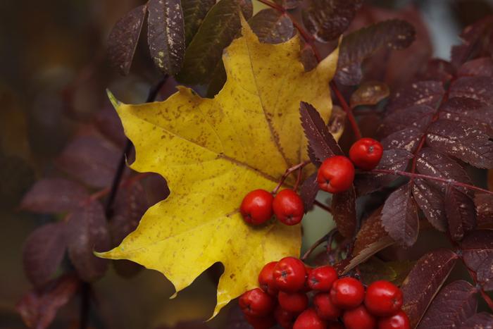 http://4.bp.blogspot.com/-NhTEAvUBXv4/TVOt2RBJfbI/AAAAAAAAAwE/yXN5P6hIOjI/s1600/Thanksgiving+Colors%252C+700.jpg