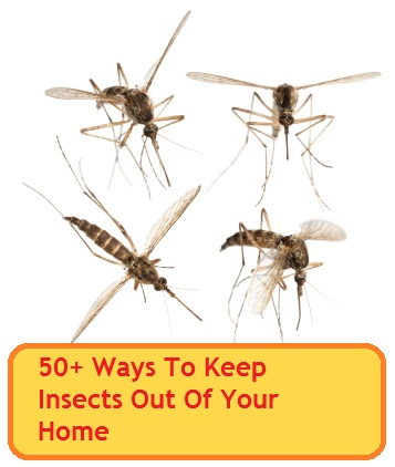 50 ways to keep insects out of your home - Home remedies to keep fleas away ...