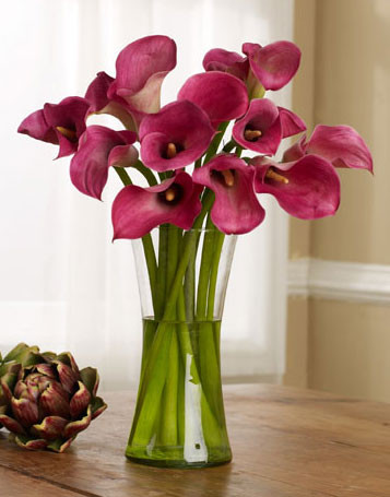 Calla lilies wedding flower Calla lily denotes beauty in the language of