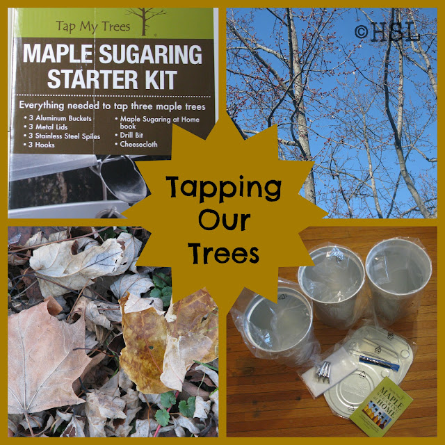 Tap My Trees, Maple Sugaring Supplies