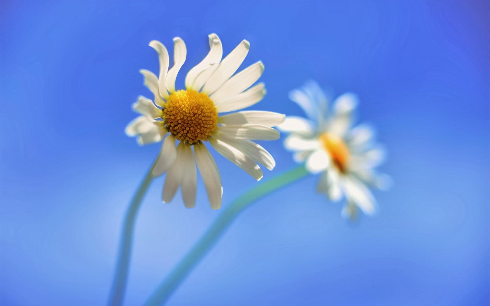 """<img src=""""http://4.bp.blogspot.com/-Ni9zZNhlNt4/UukHylSgJrI/AAAAAAAAKkE/54ywUAHALWc/s1600/cute-flower-wallpaper.jpg"""" alt=""""cute flower wallpaper"""" />"""