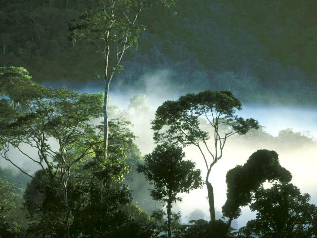 Potensi Sumber Daya Hutan