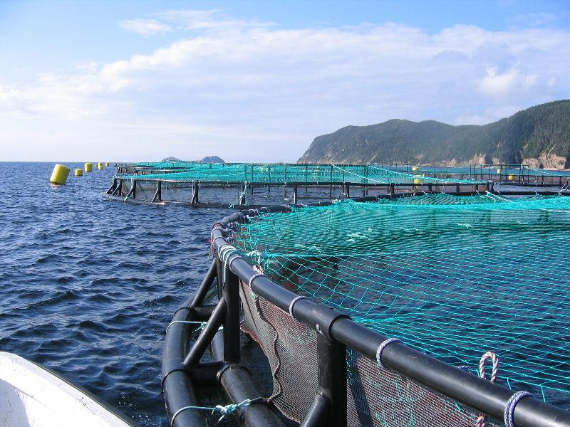 aquaculture essay