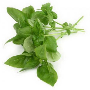 The Tulsi Plant Can Be Used To Remove Fluoride From Drinking Water - Tulsi Leaves