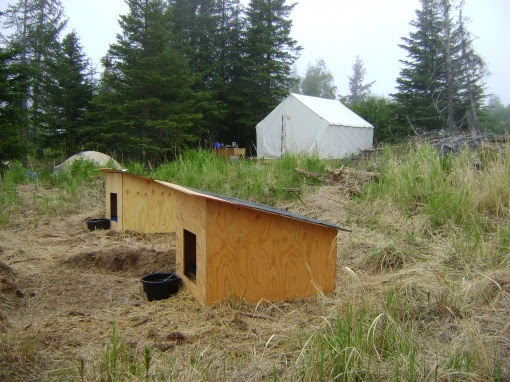 Homesteading in alaska from the beginning for How to get a homestead in alaska