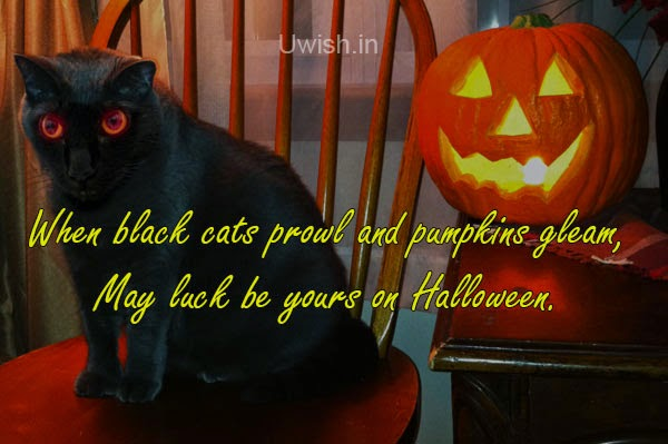 Happy Halloween e greeting cards and wishes with lighten pumpkin and black cat.