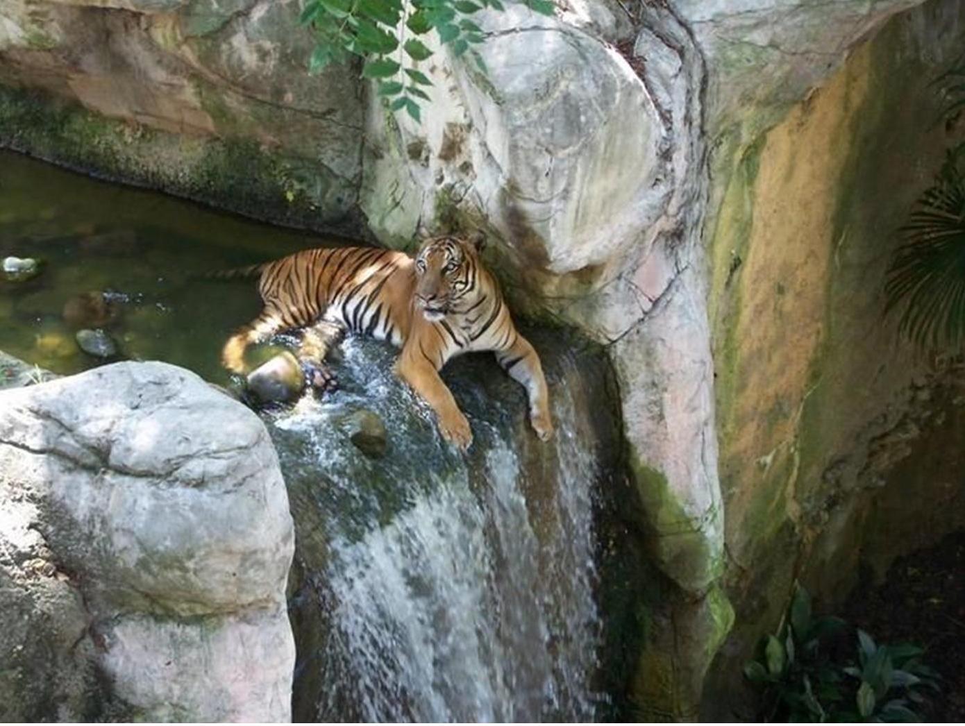mundo animal fotos: