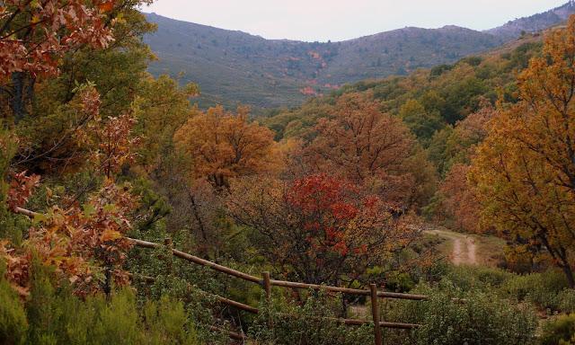 Bosques de otoño en la Sierra del Rincón de Madrid