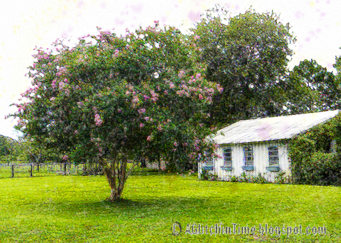 Barn and Crepe Myrtle.