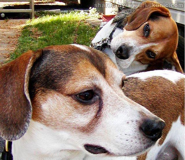 http://4.bp.blogspot.com/-NjvOCobSgio/TXhGi-tCTkI/AAAAAAAAQho/gJpa90mcHKM/s1600/these_funny_animals_632_640_33.jpg
