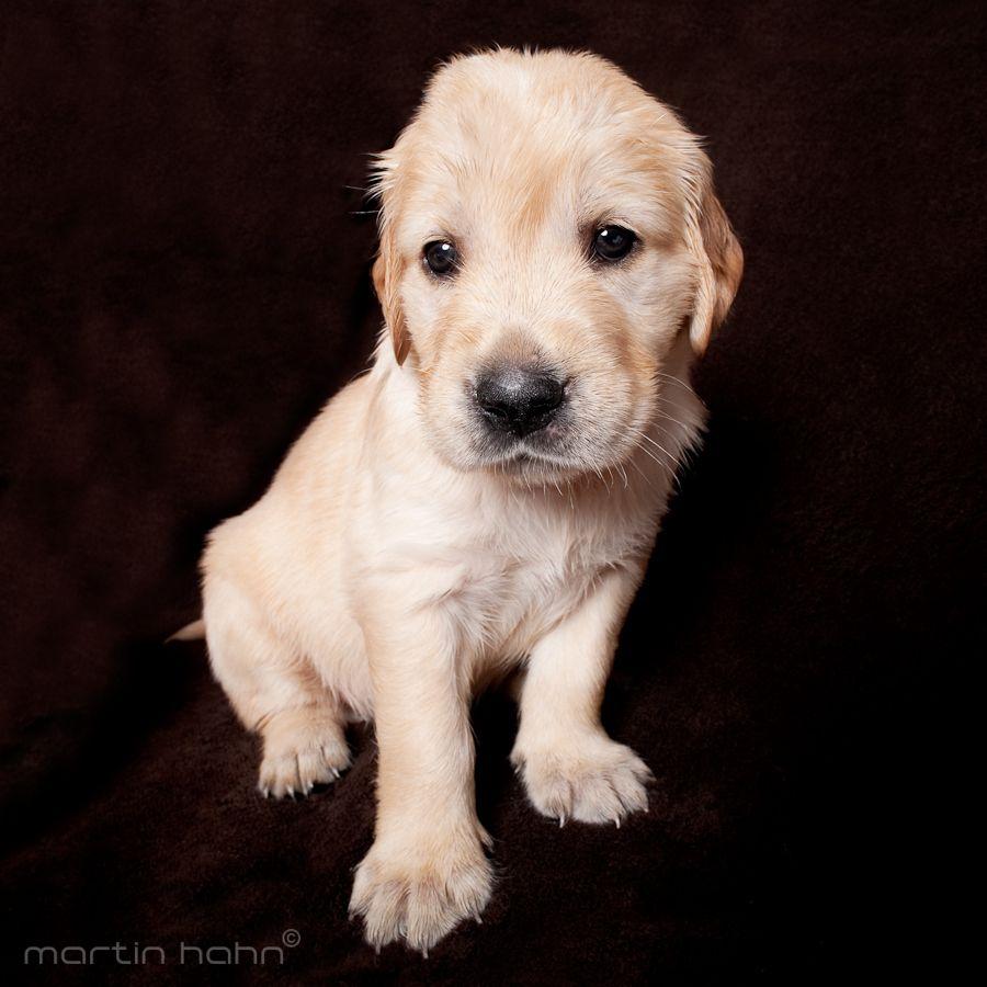14. Puppy by Martin Hahn