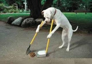 Como Ensinar Truques Para Cachorros