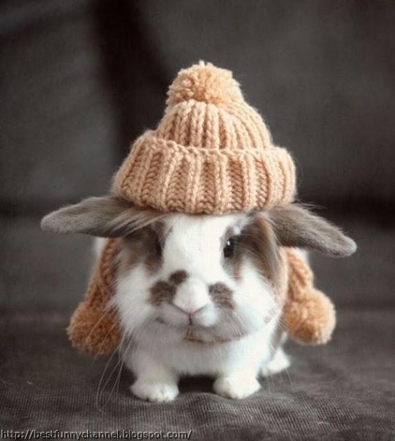 Funny bunny.