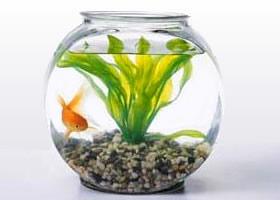 El cuidado adecuado para tus peces tienda de de mascotas for Oxigeno de peceras
