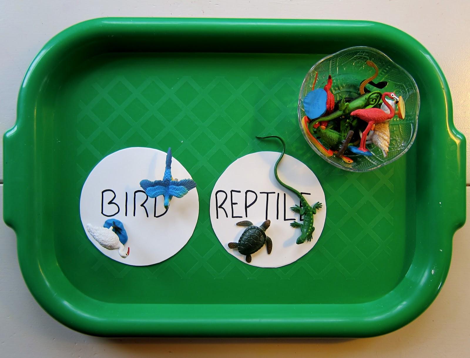 preschool syllabus  birds