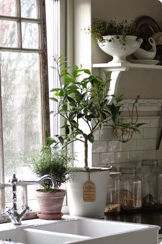 Plantas aromáticas para decorar cocina