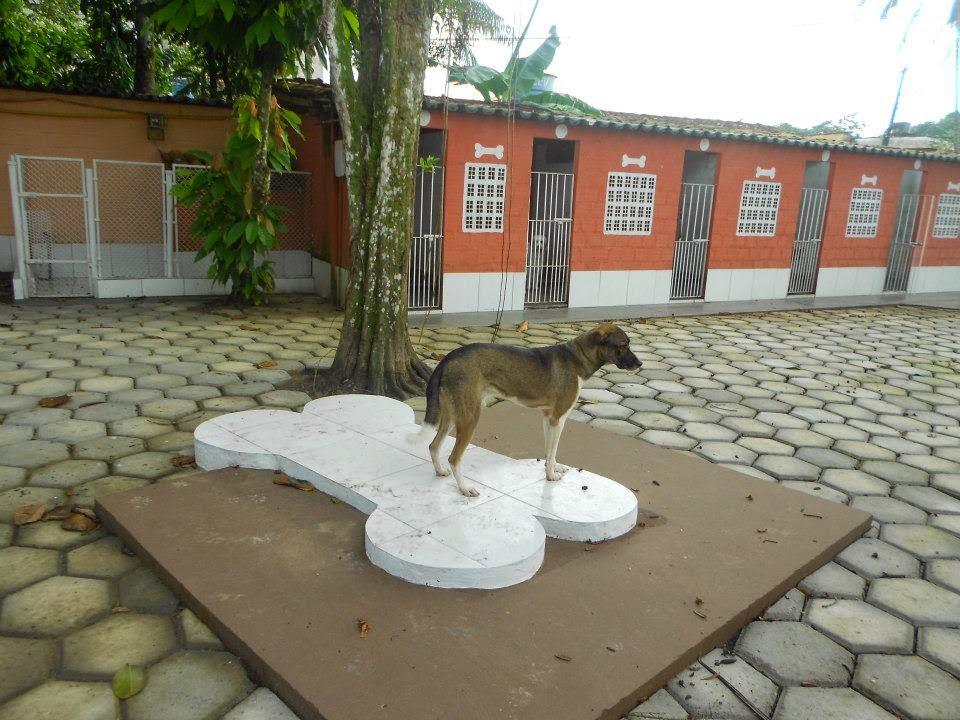 Hotel- Spaço Animal