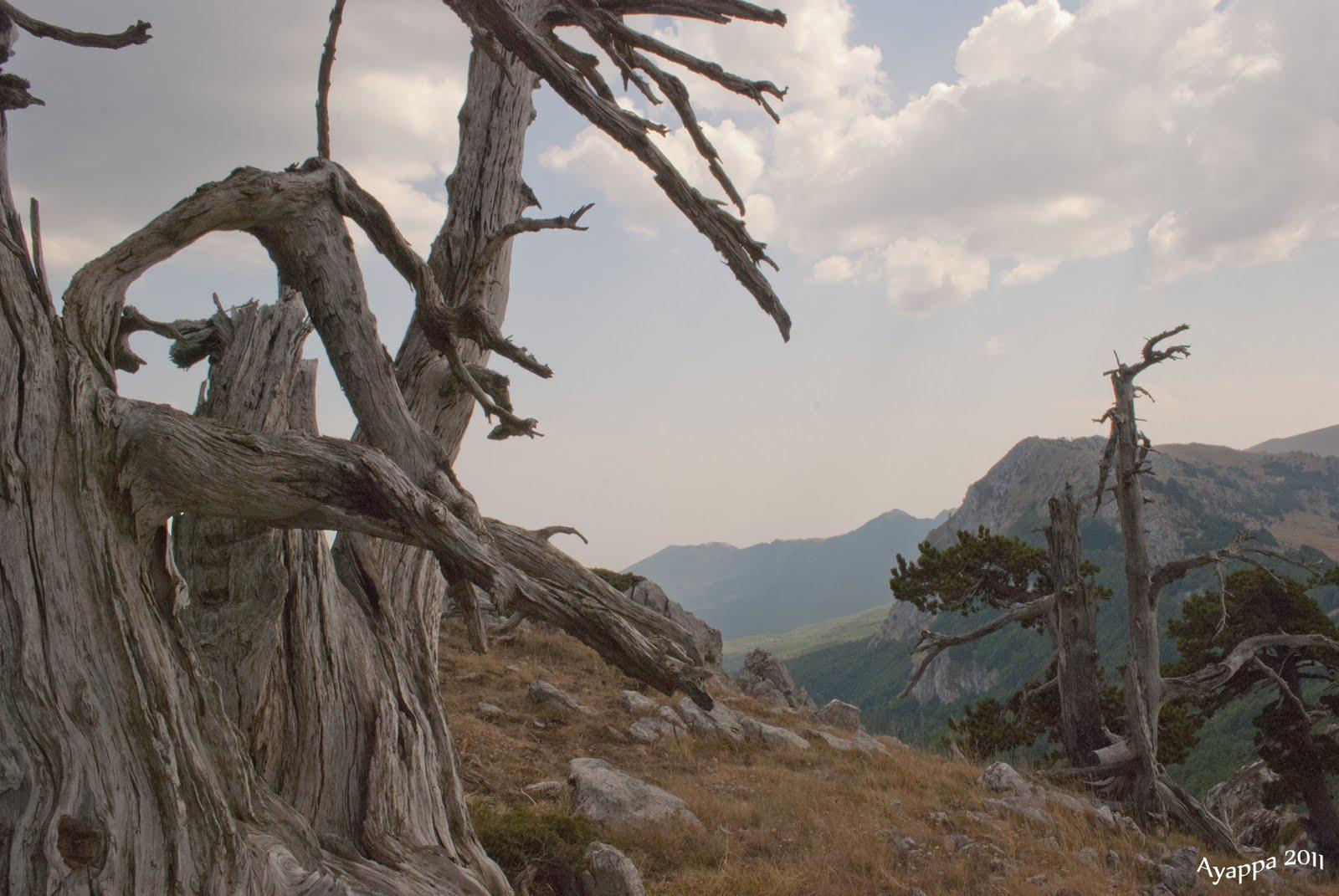 Alberi e dintorni storie di alberi il giardino degli dei - Il giardino degli dei ...