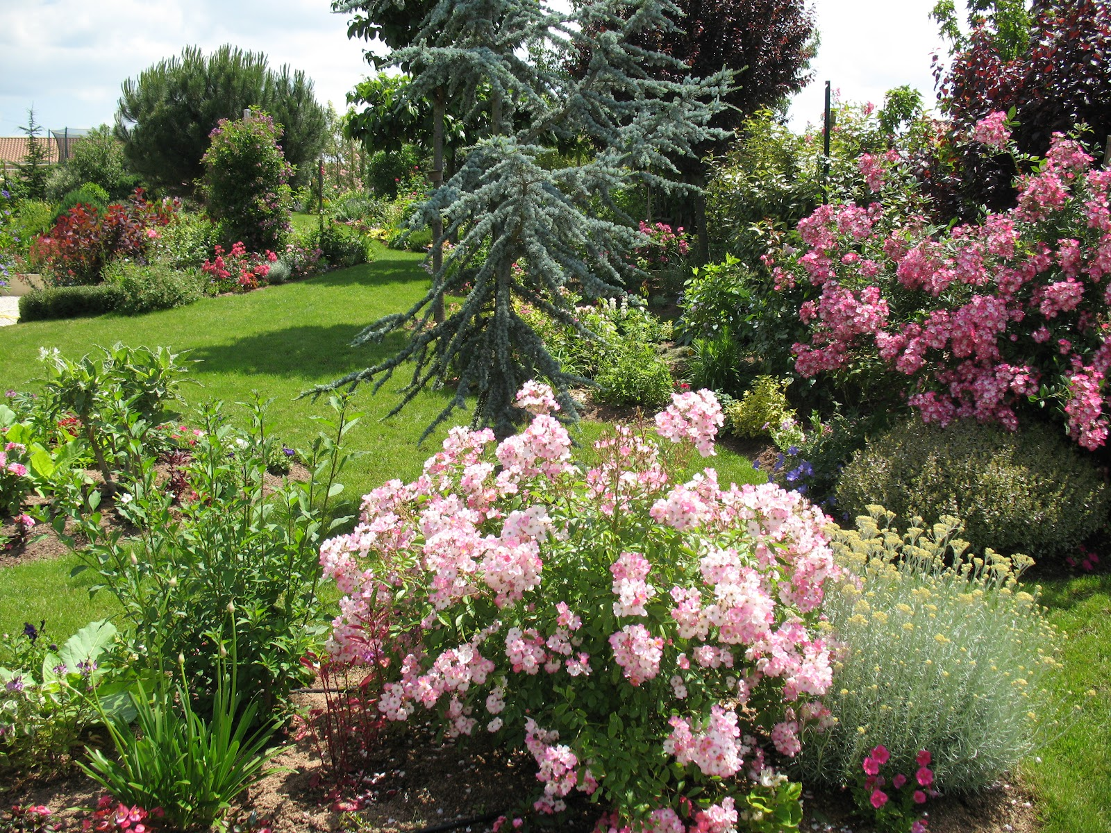 Roses du jardin Chªneland Le jardin au cours de la belle saison