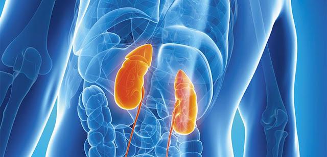 Sistema urinario y biologia