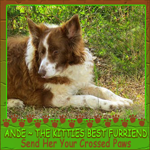 Please purr for Ande