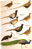 plate from Mark Brazil's Birds of East Asia