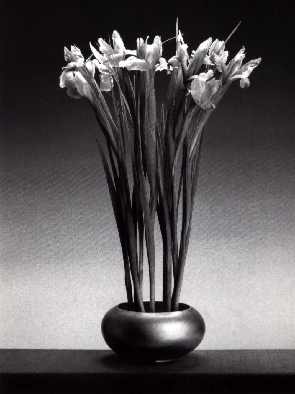 Badinicreateam FLOWERS ROBERT MAPPLETHORPE