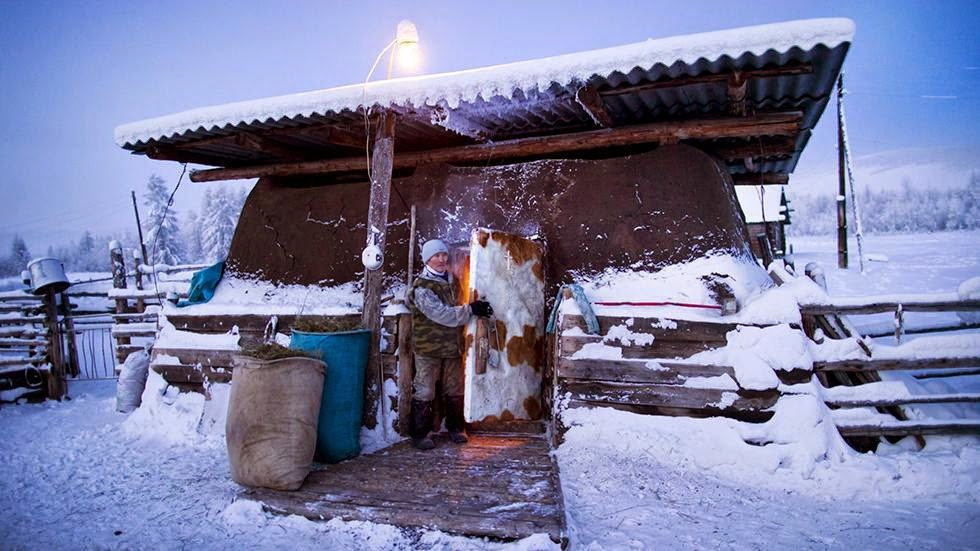 Farmer Nikolai Petrovich closes the door to his cows' heavily-insulated stable after putting the flock to bed for the night. - Welcome to The Coldest Place Inhabited By Humans on Earth