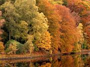 . sesudos astrónomos habrán calculado que el equinoccio de otoño era hoy. fondo los arboles en otono pdi