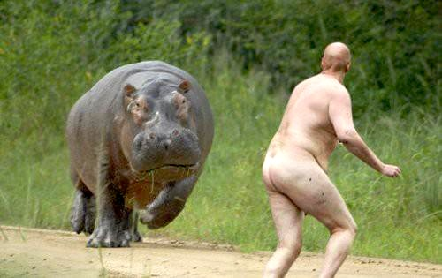 caption+this+hippo+robert+mcleod.jpg
