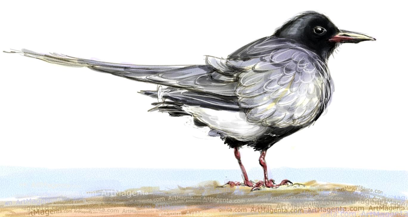 En  fågelmålning av en Svarttärna  från Artmagentas svenska galleri om fåglar.
