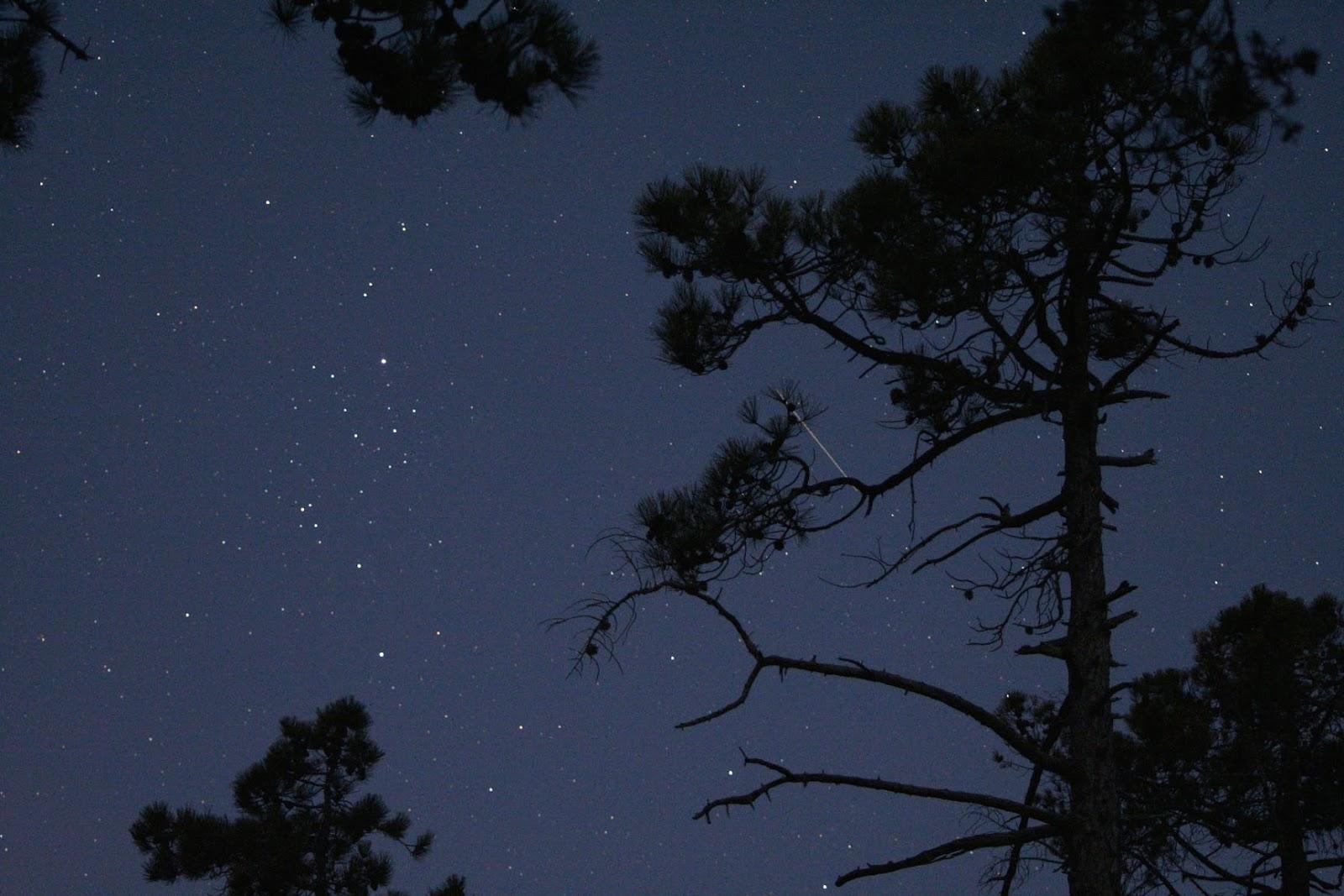 Ночь звуки природы скачать