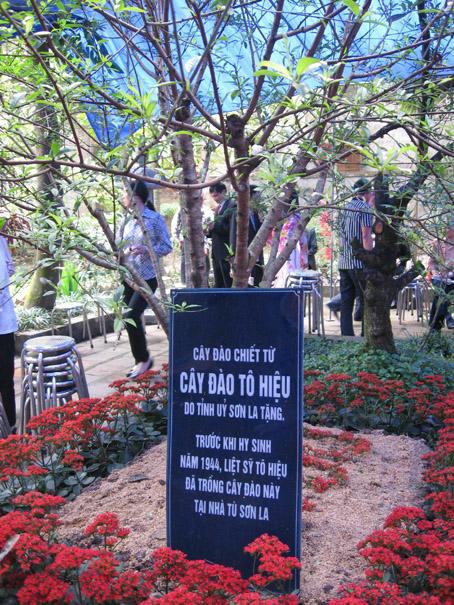 Cây đào chiết từ nhà từ Sơn La trong khuôn viên Nhà tưởng niệm Liệt sĩ Tô Hiệu.