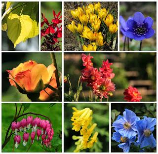 Trädgårdsfärger
