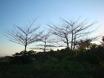 Por do Sol local