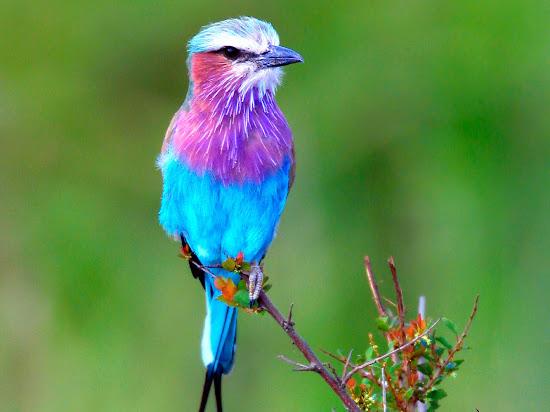 Que significa soñar con ave