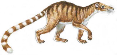 mamiferos del Paleoceno Chriacus