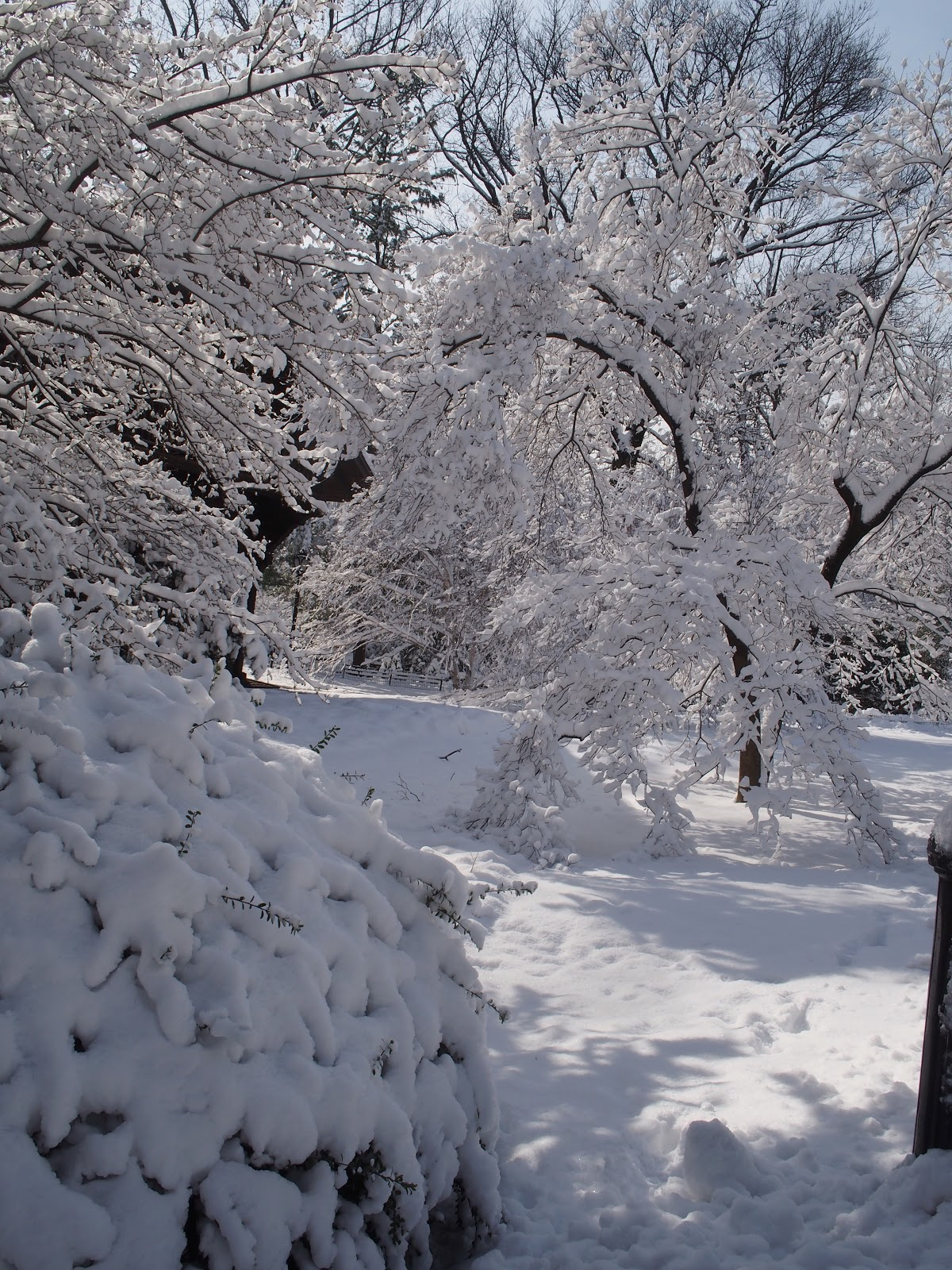 Winter Wonderland, #centralpark #nyc #snow 2013